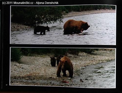 Strana 84– medvědi voblasti vulkánů jižní Kamčatky