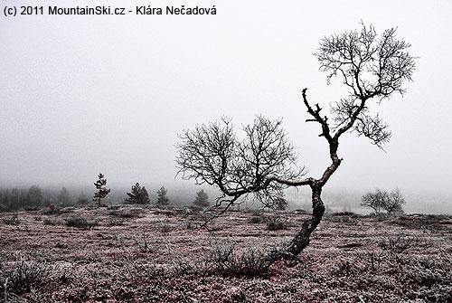 Příroda vnárodním parku Pallas