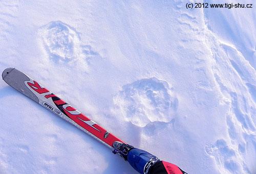 Medvěd nám šlapal stopu