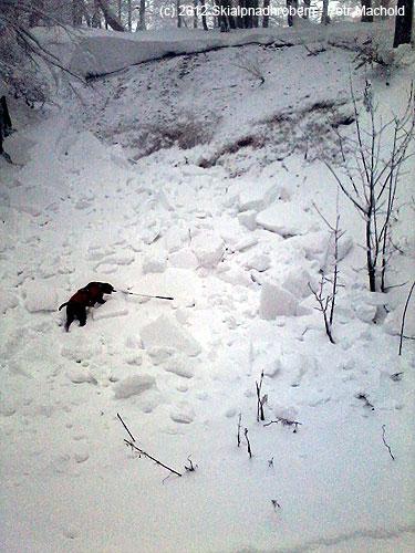 Velký odtrh návěje voblasti Bouřňáku dne 16.12.2012, pes má 80cm