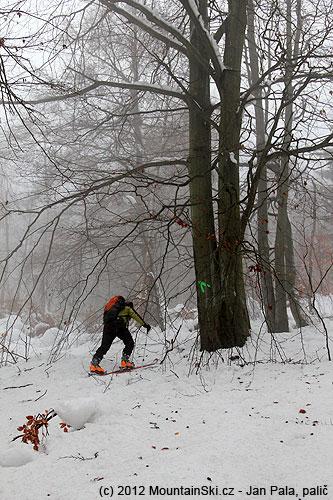 Mikulovská vede vdolní části starým listnatým lesem