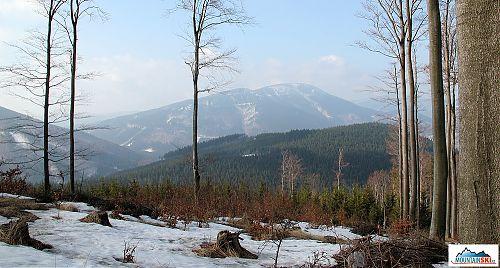 Mezistromový výhled na druhý nejvyšší beskydský vrchol - 1276 m vysoký Smrk