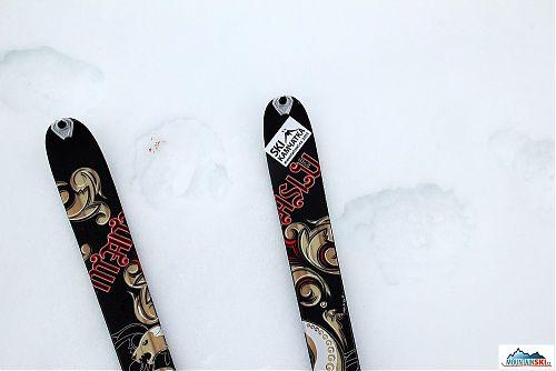 Lyže Dynafit Manaslu a čerstvé medvědí stopy, jednu tlapu má zraněnou
