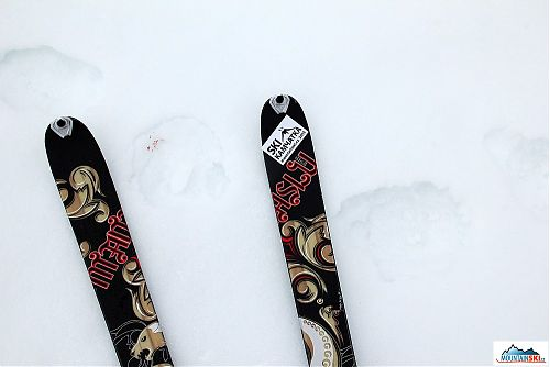 Skis Dynafit Manaslu and fresh bear's tracks, one paw is injured