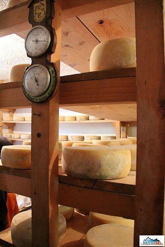 Je libo kus sýra? Ovčja planina Mangrt ve výšce 1295 metrů