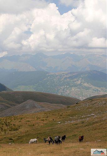 Všude samí koně, tentokrát na svazích vrcholu Medenica