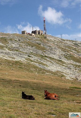 Opět koně, tentokrát pod vrcholem Baba (2601 m) v pohoří Pelister