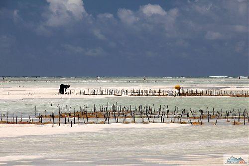 Při odlivu je moře v Paje fakt hodně daleko