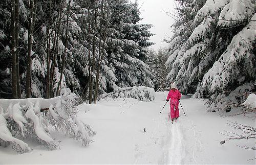 Jen hluboký sníh a stromy obsypané sněhem všude okolo