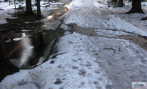 Na první úsek jsem si nevybral hlavní trasu Jizerské magistrály - stav sněhu tomu odpovídal