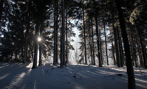 Kousek pod hřebenem se mezi stromy objevilo slunce