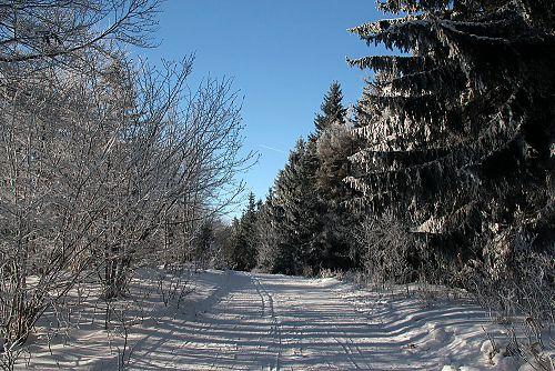 Strojově upravená běžkařská trasa na hřebenu Javorníků