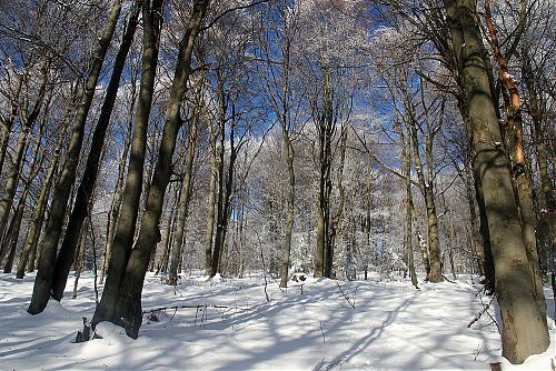 Listantý les u hřebene Javorníků nemá chybu
