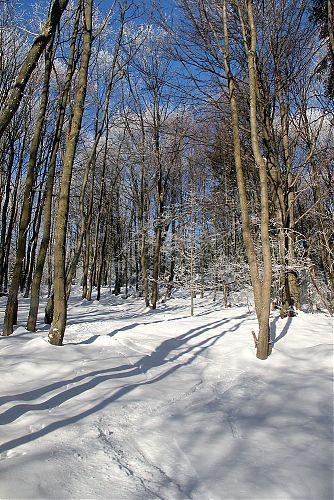 Od lyží jenom moje stopa, zbytek stop v lese byl od různých zvířátek
