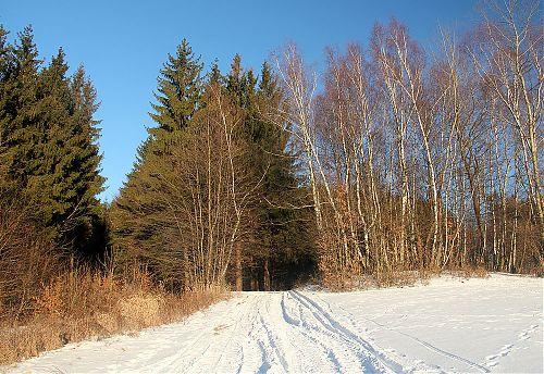Tady byla v zimě vždy jen stopa od běžek... teď je to rozjěžděné od čtyřkolek a dalších vozidel