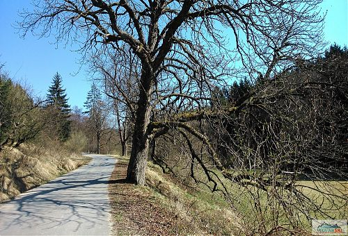 U Košařisek jsem musel zastavit kvůli takto krásně pokrouceným stromům, v pozadí vlevo by byl Troják