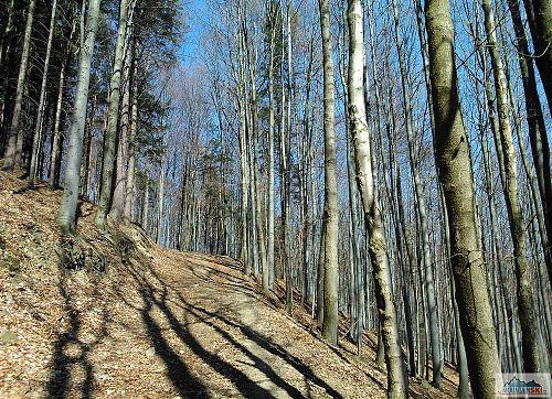 Bez listí je v lese pod vrcholem Na Šarmance (715 m) vidět dobře - tady se mi asi nechtělo kašpárkovat