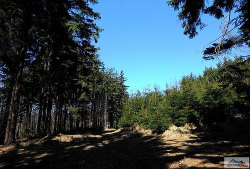 Ukázkový lesní úsek nedaleko rozcestí Holý vrch