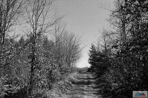 Výjezd z lesa v oblasti U Češků
