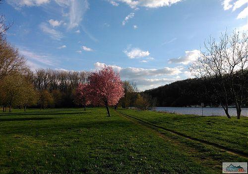 Vše kvete jako v květnu, přes vodu je Nelahozeves