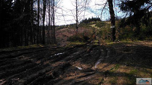 Kdo vytvořil dokonalé bahniště? No přece těžká lesní technika při těžbě dřeva...