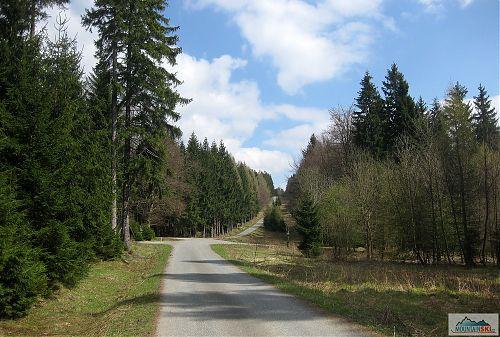 Dokonalý pořádek v německém lese