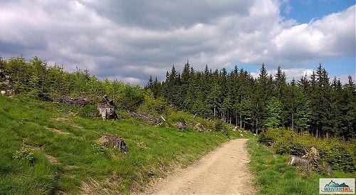 Hřeben Vsackých Beskyd je místy důkladně vyčištěn od stromů