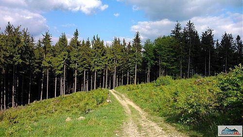 Na hřebenu mezi Vsackou Tanečnicí a Ptáčnicí (830 m)