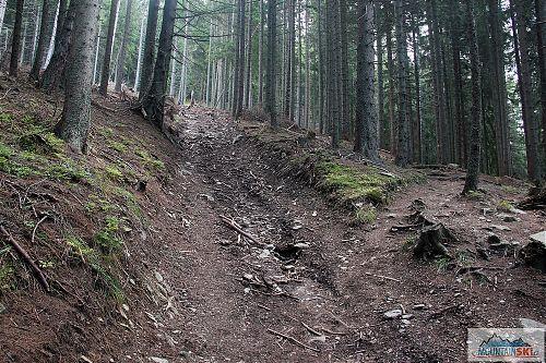 Až někdy na Slovensku narazíte na zelené mužiky, co vás budou obtěžovat kvůli chůzi nebo lyžování mimo značky - vytiskněte si tuto fotku z těžby dřeva v národním parku, zatímco turistická značka vede téměř po vrstevnici, tak těžařská cesta je přímo ve spádnici