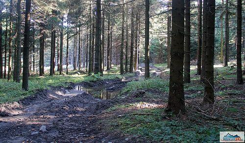 Těžba dřeva 1 - cestou na Velký Javorník