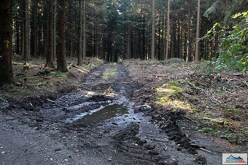 Těžba dřeva 2 - cestou na Velký Javorník