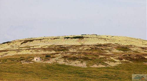 Řopíky na východních svazích Luční hory (1555 m)