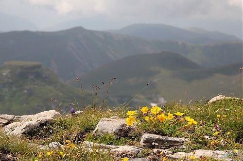 V Makedonii všude na horách bylo rozkvetlo