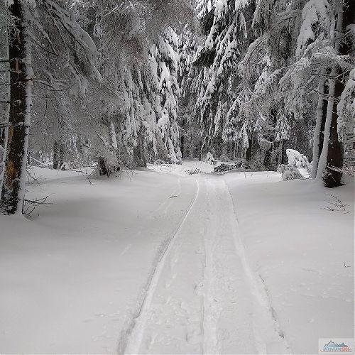 Trasa vedla cestou necestou - stále rovně přes les