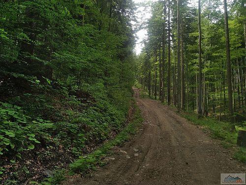 Sjezd ze Vsackého Cábu s podkladem upraveným lesní technikou