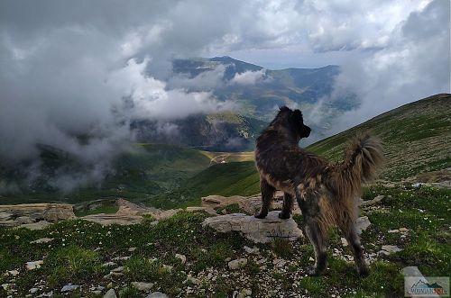 Na výlet s námi šli i dva šarplaninští psi